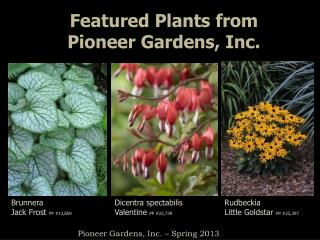 Featured Plants from  Pioneer Gardens, Inc.
