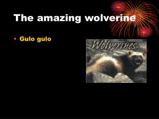 The amazing wolverine