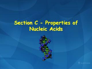 Section  C  -  Properties of Nucleic Acids