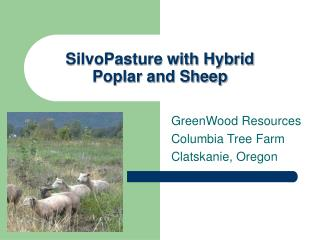 SilvoPasture with Hybrid  Poplar and Sheep