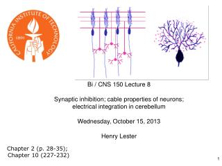 Bi / CNS 150 Lecture 8 Synaptic inhibition; cable properties of neurons;