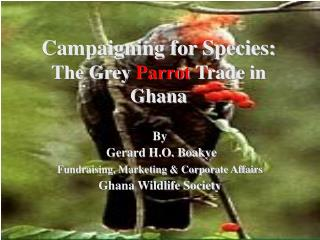 Campaigning for Species: The Grey Parrot Trade in Ghana