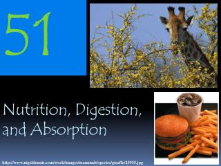 Nutrition, Digestion, and Absorption
