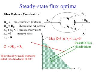 Steady-state flux optima