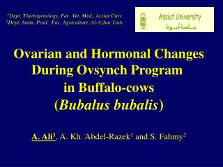 Ovarian and Hormonal Changes During Ovsynch Program  in Buffalo-cows ( Bubalus bubalis )