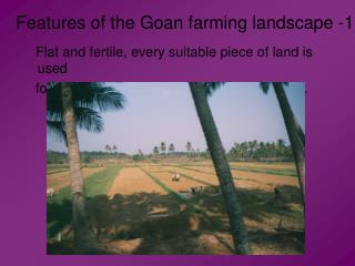 Features of the Goan farming landscape -1
