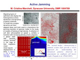 Active Jamming  M. Cristina Marchett, Syracuse University, DMR 1004789