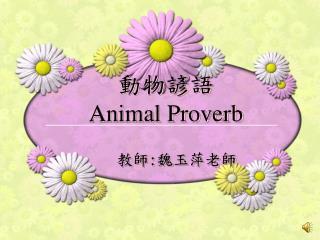 動物諺語 Animal Proverb