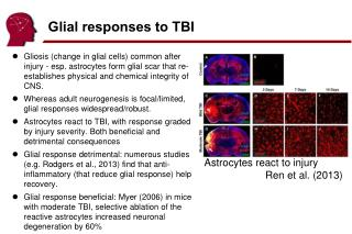 Glial responses to TBI