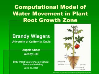 Computational Model of Water Movement in Plant Root Growth Zone