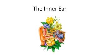 Sudden Sensorineural Hearing Loss