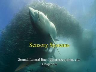 Sensory Systems Sound, Lateral line, Electroreception, etc. Chapter 6