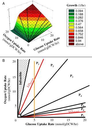 Glucose Uptake Rate (mmol/gDCW/hr)