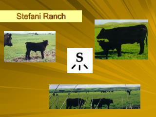 Stefani Ranch