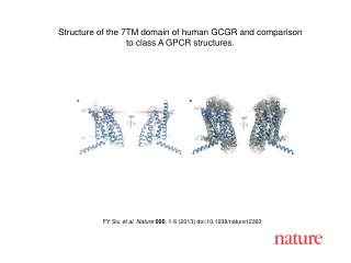FY Siu et al. Nature 000 , 1-6 (2013)  doi:10.1038/nature12393