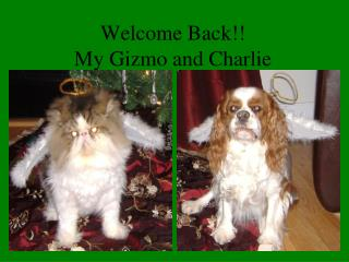 Welcome Back!! My Gizmo and Charlie