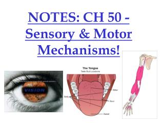 NOTES: CH 50 - Sensory & Motor Mechanisms!
