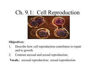 Ch. 9.1:  Cell Reproduction