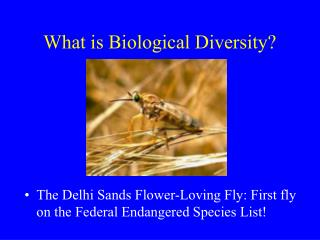 What is Biological Diversity?