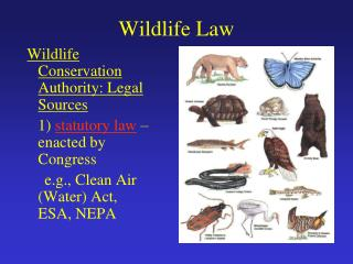 Wildlife Law