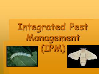 Integrated Pest Management  IPM