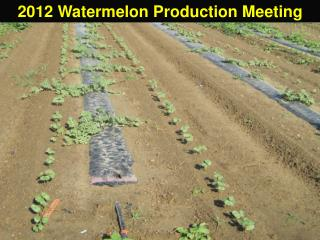 2012 Watermelon Production Meeting