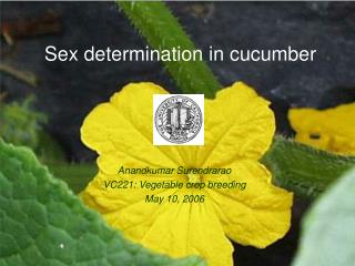 Sex determination in cucumber