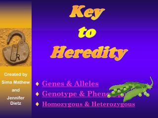Genes & Alleles Genotype & Phenotype Homozygous & Heterozygous