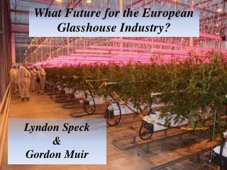 What Future for the European Glasshouse Industry?