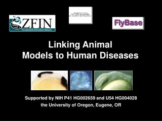 Linking Animal  Models to Human Diseases