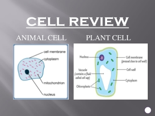 Cells to Systems