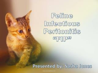 "Feline  Infectious  Peritonitis ""FIP"""