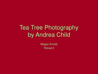 Tea Tree Photography by Andrea Child