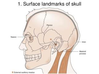 1. Surface landmarks of skull