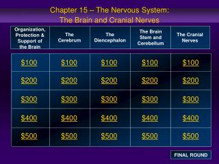 Chapter 15 – The Nervous System:  The Brain and Cranial Nerves
