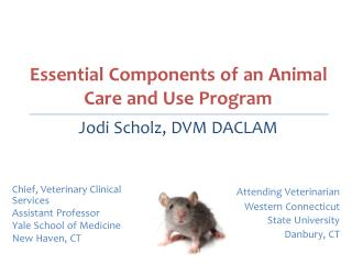 Chief, Veterinary Clinical Services Assistant Professor Yale School of Medicine New Haven, CT