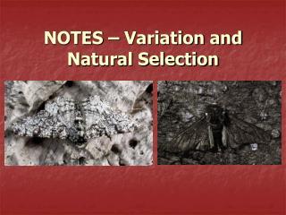 NOTES – Variation and Natural Selection