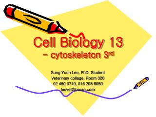 Cell Biology 13 - cytoskeleton 3 rd