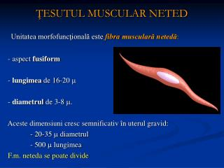 Å¢ESUTUL MUSCULAR NETED