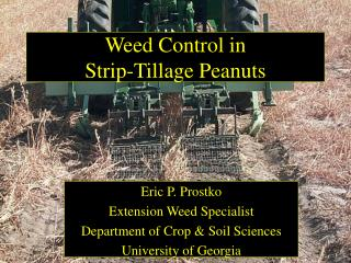 Weed Control in  Strip-Tillage Peanuts