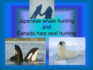 Japanese whale hunting  and  Canada harp seal hunting