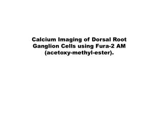 Calcium Imaging of Dorsal Root Ganglion Cells using Fura-2 AM ( acetoxy-methyl-ester).