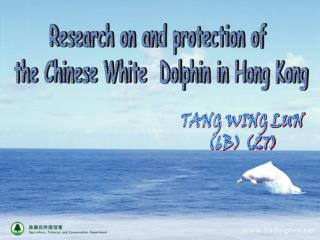 Research on and protection of  the Chinese White  Dolphin in Hong Kong