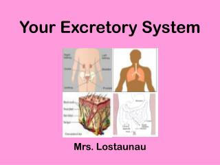 Your Excretory System