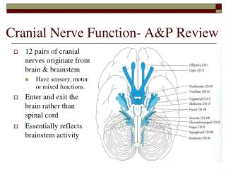 Cranial Nerve Function- A&P Review