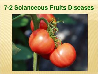 7-2 Solanceous Fruits Diseases
