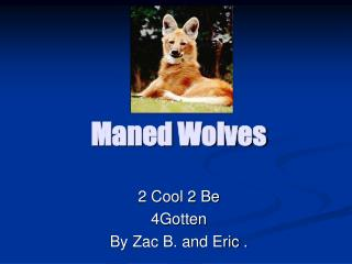 Maned Wolves
