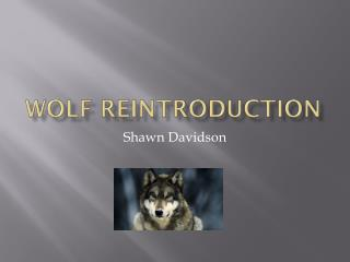 Wolf Reintroduction