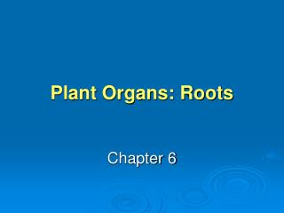 Plant Organs: Roots