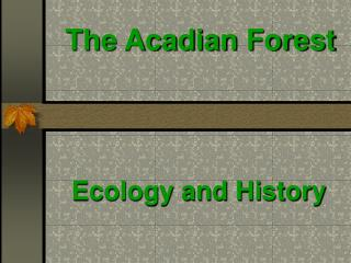 The Acadian Forest